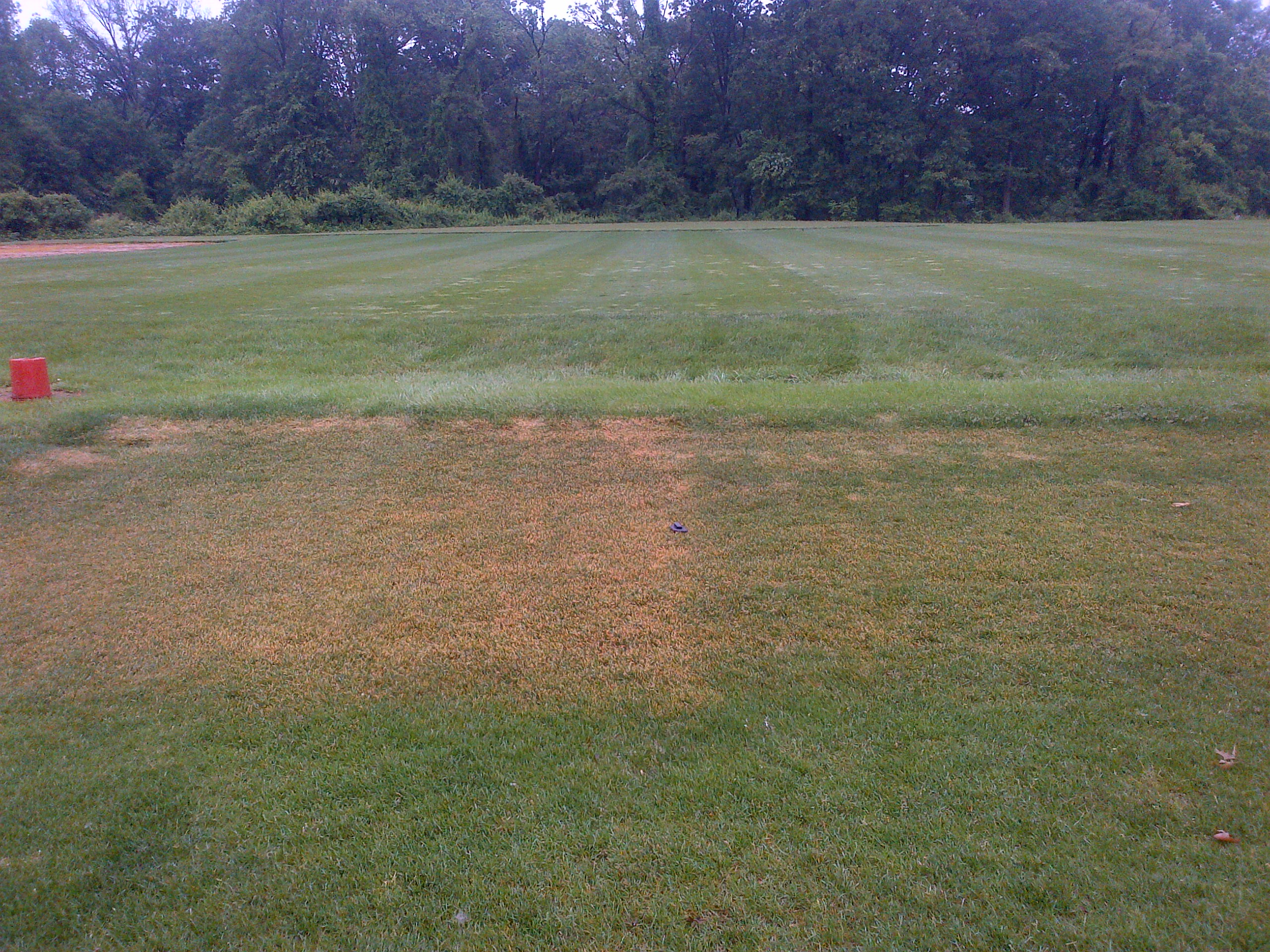 Kentucky Bluegrass Injury