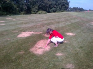summer patch disease on hard fescue