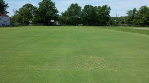 Creeping bentgrass entries in Dr. Stacy Bonos' evaluation trials that are highly susceptible to dollar spot disease appear in the image foreground.