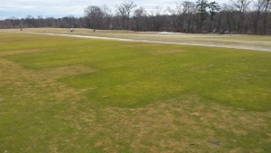 Blotchy, tan-colored plots and borders around this potassium trial are suffering from winterkill. Photo taken 15 March 2015. Healthier looking turf has received K fertilization; dying turf has not.