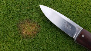 Suspected initial outbreak of Pythium on velvet bentgrass maintained at a 0.110-inch height that occurred over the weekend (August 7) in a cultivation trial at Hort Farm No. 2 in North Brunswick NJ.